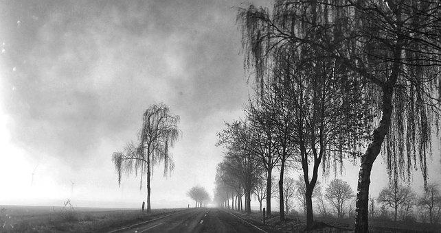 Road, Gloomy, Trees, Nature, Dark, Landscape, Sky