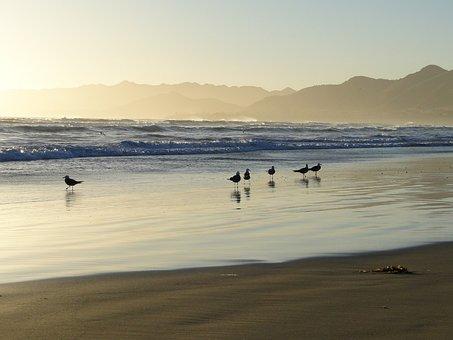 Ocean, Seagull, Coast, California, Usa