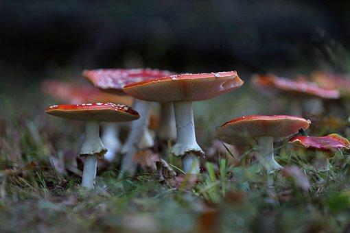 Matryoshka, Macro, Mushrooms, Red, Forest, Nature