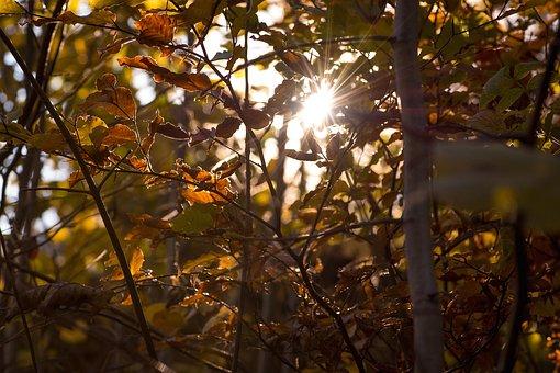 Autumn, Leaves, Aesthetic, Autumn Sun, Back Light