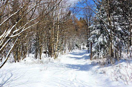Winter, Forest, Snow, Conifers, Firs, Away, Hiking