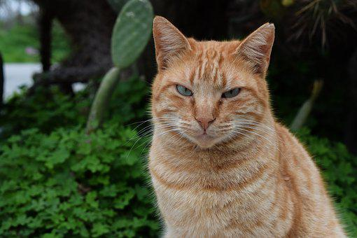 Cat, Stray, Tough, Animal, Homeless, Portrait, Face