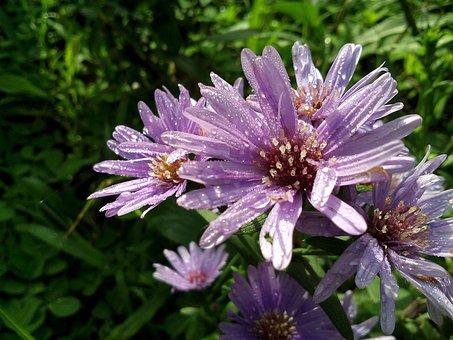 Blossom, Spring, Nature, Flower Leaf, Plant, Color