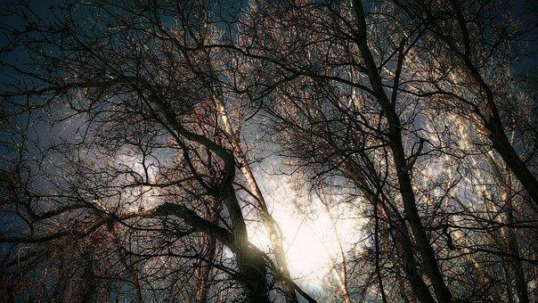 Oak Trees, Surreal, Sky, Glowing Sun