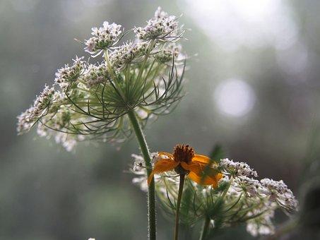 Plants, Garden, Flowers, A Garden Plant, Summer, Nature
