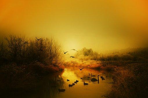 Autumn, Birds, The Sun, East, Beautiful, Swans, Tree