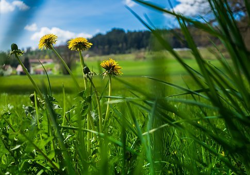 Summer, Flower, Grass, Background, Screen Background