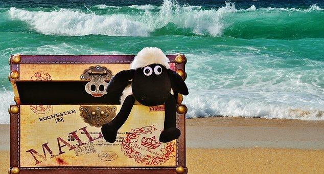Sea, Beach, Wave, Box, Luggage, Sheep, Funny, Cute