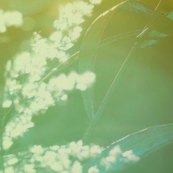 Natural, Green, Straw, Macro, Season, Botanical