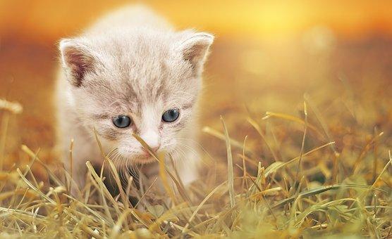 Cat, Cute, Cat Baby, Kitten, Pet, Animal, Charming