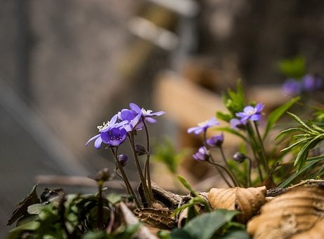 Flower, Forest, Nature, Forest Floor, Blossom, Bloom