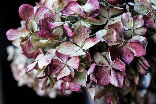 Hydrangea, Flower, Bouquet, Pink, Green, Plant, Nature
