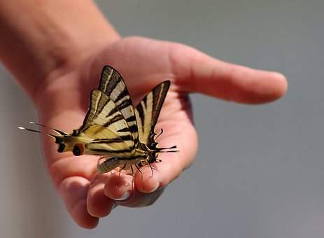 Butterflies, Animals, Hand, Wings, Insect