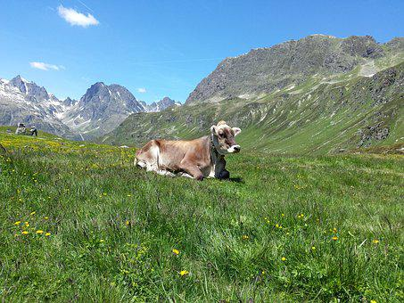 Mountains, Alphabet, Mountain Cow
