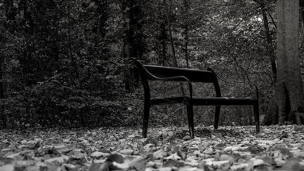 Black And White, Park Bench, Park, Bank, Forest, Nature