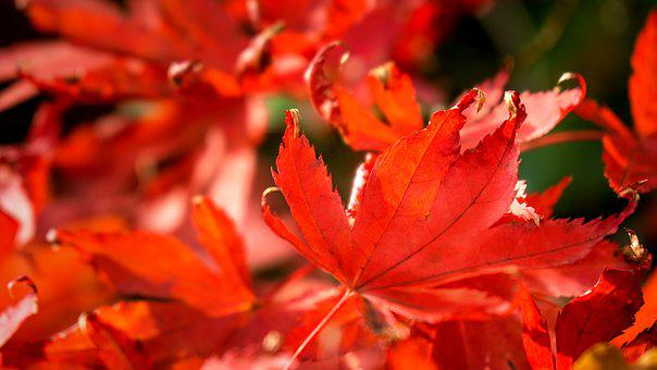 Nature, Time Of Year, Autumn, Seasons, Leaf, Leaves