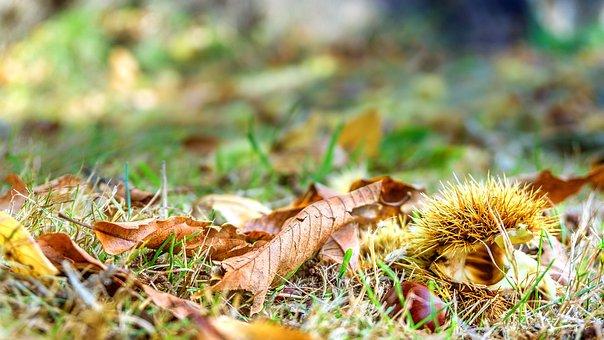 Nature, Seasons, Autumn, Time Of Year, Four Seasons