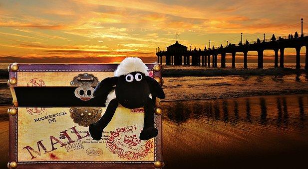 Sunset, Sea, Beach, Wave, Box, Luggage, Sheep, Funny