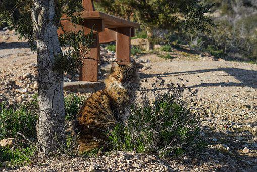 Cat, Feral, Outdoor, Animal, Kitten, Young, Adorable