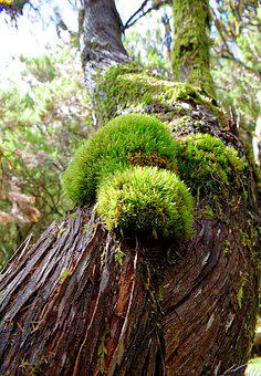 Tree, Moss, Bark, Wood, Tribe, Fouling, Green, Brown