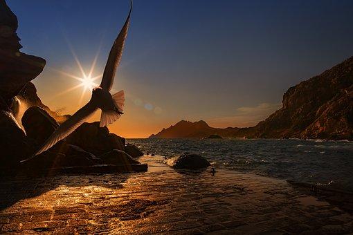 Sea, Seagull, Bird, Seevogel, Water Bird, Coast, Port