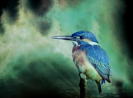 Kingfisher, Bird, Animal, Nature, Fauna, Color