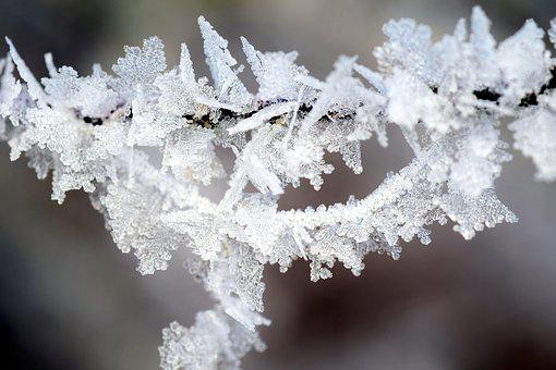Frost, Winter, Wintry, Ice, Winter Magic, Cold