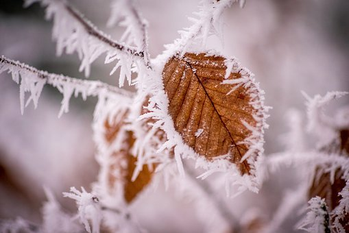 Winter, Frost, Cold, Wintry, Ice, Snow, Tree, Leaves