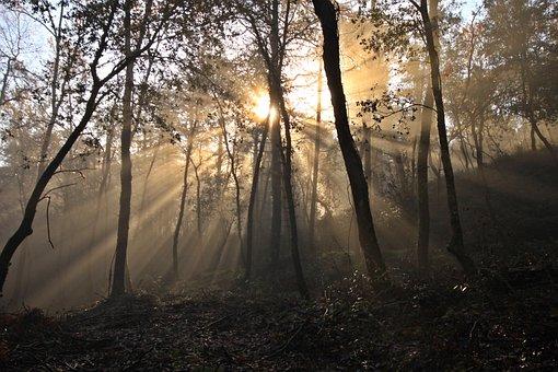 Tree, Sun, Trees, Leaves, Landscape, Autumn, Mountain