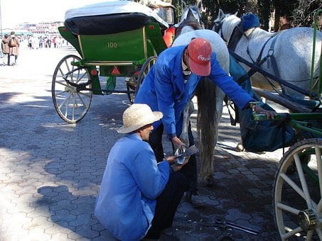 Shoeing, Marrakesh, Horse, Carriage, Hire, Animal
