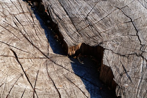 Textures, Tree, Bark, Trunk, Nature, Forest