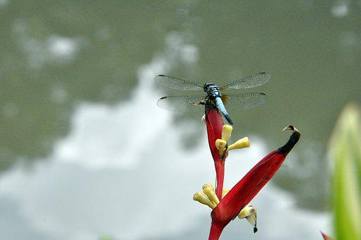 Damselfly, Dragonfly, Park, Insect, Nature, Wildlife