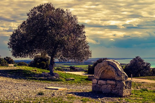 Fountain, Ancient, Stone, Architecture, Olive Tree