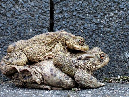 Toads, Hike, Pair, Bear, Tugs, Pairing, Lovers