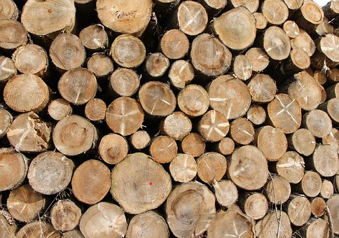 Tree Trunks, Wood, Forest, Holzstapel, Annual Rings