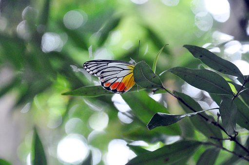 Butterfly, Fauna, Nature, Summer, Insect, Wild, Biology