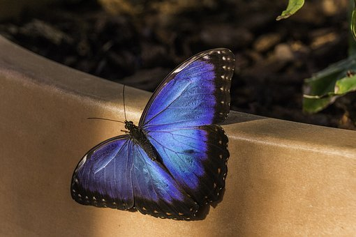Butterfly, Blue, Nature, Wing, Single, Colour, Bright