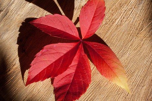 Autumn, Fall Foliage, Golden Autumn, Leaves