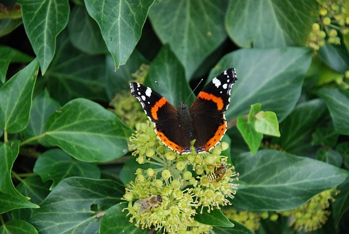 Butterflies, Animals, Grue, Insect, Butterfly, Nature