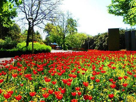 Flowers, Field Of Flowers, Nature, Tulips, Spring