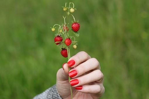 Wild Strawberry, Tutaev, Yaroslavl Region, Berry, Wind