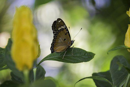 Butterfly, Leaf, Natural, Insect, Wing