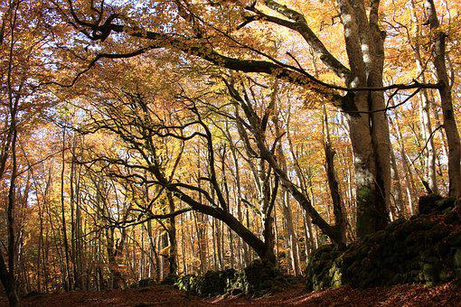 Forest, Fall, Magic, Celtic, Mystical, Nature