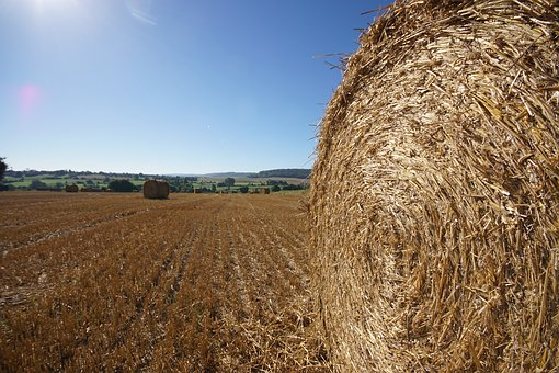 Straw Bale, Roller, Fields, Straw, Agriculture, Hay
