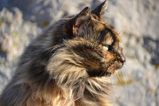 Cat, Tortoise Shell, View, Sun, Strays