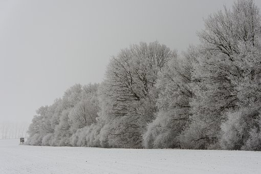 Winter, Forest, Wintry, Winter Trees, Tree, White