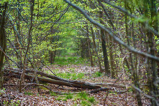 Wood, Forest, Tree, Foliage, Undergrowth, Nature, Fall
