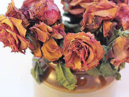 Dried Roses, Roses, Cobwebs, Flowers, Dry, Romance