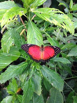 Butterfly, Butterflies, Nature, Summer, Colorful, Wing