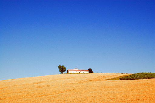 Campaign, Wheat, Agriculture, Field, Summer, Ears